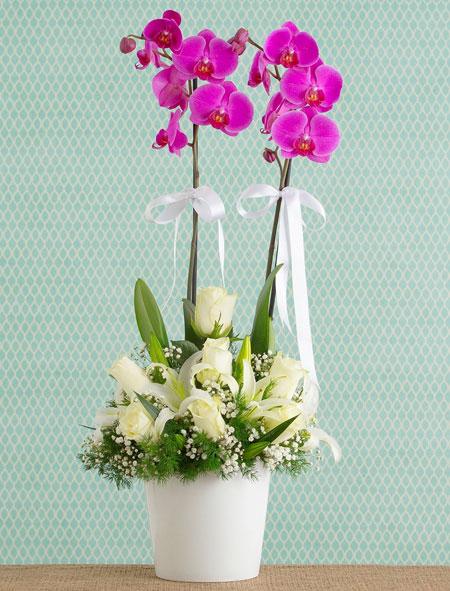 Vazoda Orkide Aranjmanı