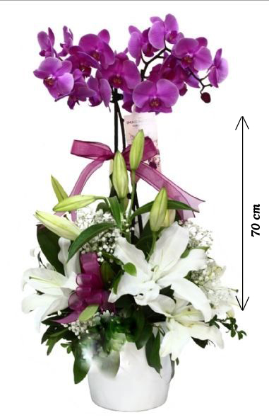 Seramik Vazoda Canlı İTHAL Orkide