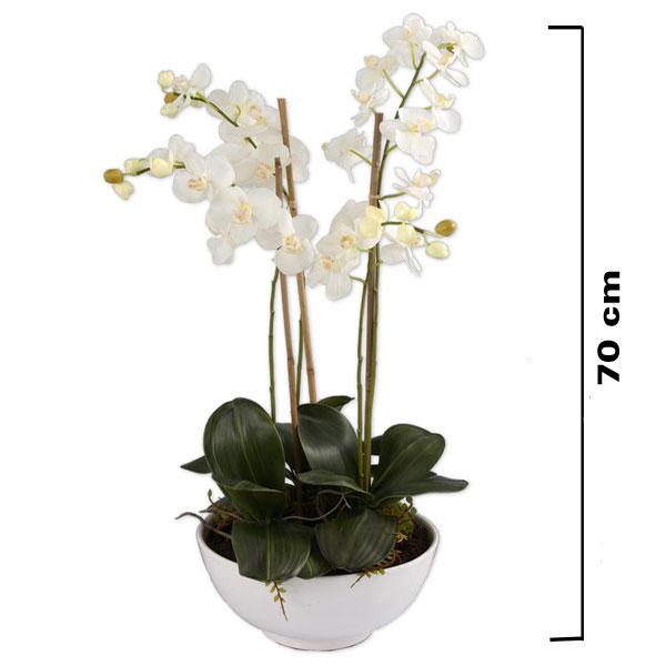 Kasede Phalaenopsis Orkide