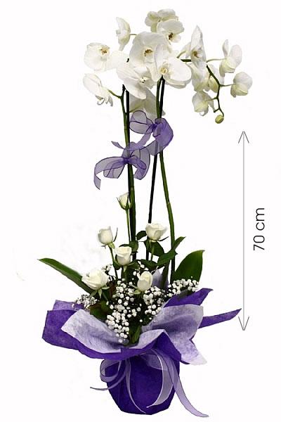 İTHAL Orkide Aranjmanı