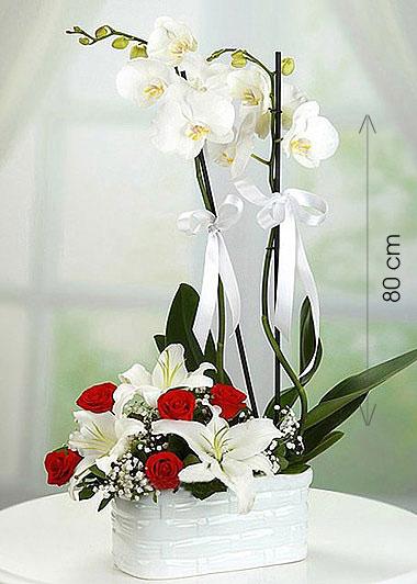 Canlı İTHAL Orkide Aranjmanı