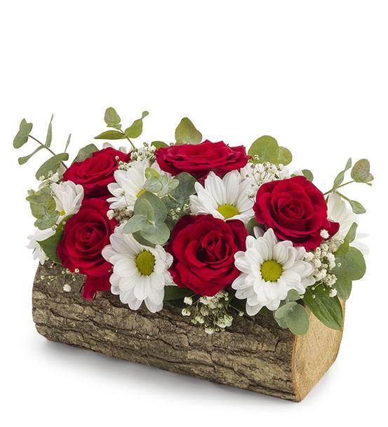 Doğal Kütükte Güller ve Papatya