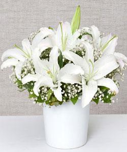 Kazablanka Çiçeği Aranjman