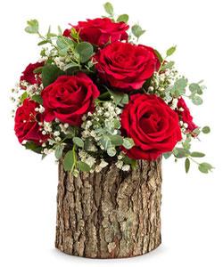 Doğal Kütükte Güller