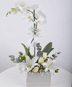 Kutuda Orkide Aranjmanı