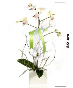 Seramik Vazoda Canlı Orkide