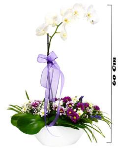 Canlı Orkide Aranjmanı