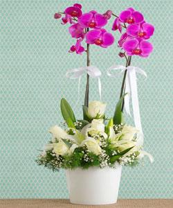 Vazoda İTHAL Orkide Aranjmanı